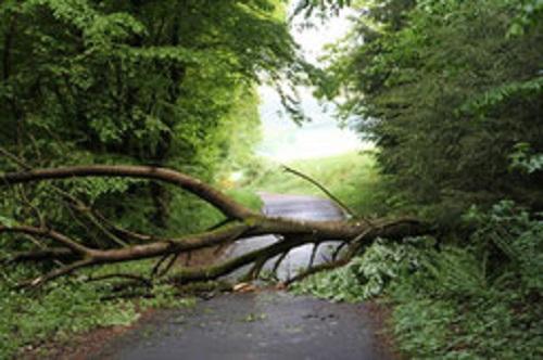 Umgestürzter Baum wurde entfernt